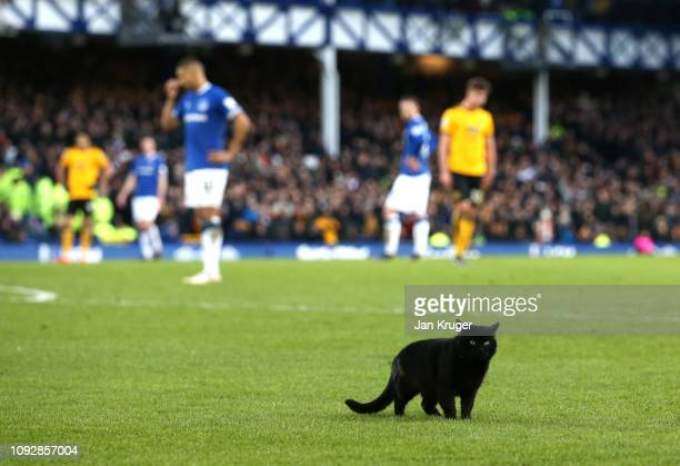 General view as a black cat invades the pitch during the Premier League match between Everton FC and Wolverhampton Wanderers at Goodison Park on...