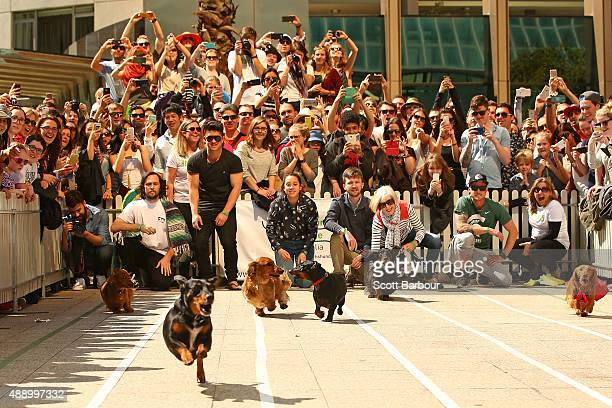 A general view as a large crowd watches as dachshunds compete in the Hophaus Southgate Inaugural Dachshund Running of the Wieners Race on September...