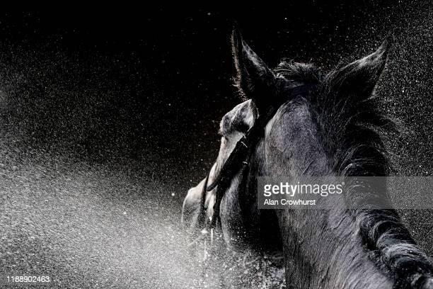 General view as a runners is hosed down after racing at Warwick Racecourse on November 20, 2019 in Warwick, England.