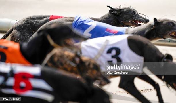 General view as greyhounds leave the traps in the first race of the day at Nottingham Greyhound Stadium on June 02, 2020 in Nottingham, England....