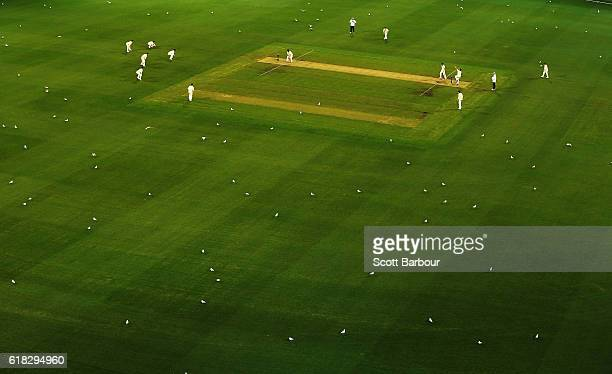 A general view as hundreds of seagulls sit on the field as Tasmania bats during day two of the Sheffield Shield match between Victoria and Tasmania...
