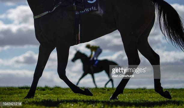 A general view as runners ease down after finishing at Newmarket Racecourse on September 28 2018 in Newmarket United Kingdom