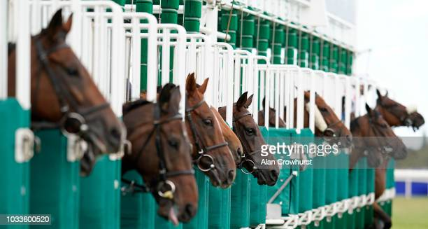 A general view as runners leave the stalls at Leopardstown Racecourse on September 15 2018 in Dublin Ireland