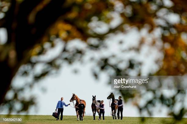 A general view as runners make their way to the racecourse from the stables at Newmarket Racecourse on October 13 2018 in Newmarket United Kingdom
