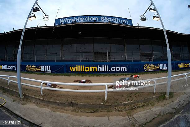 A general view as runners race towards the straight at Wimbledon Stadium on May 31 2014 in Wimbledon England