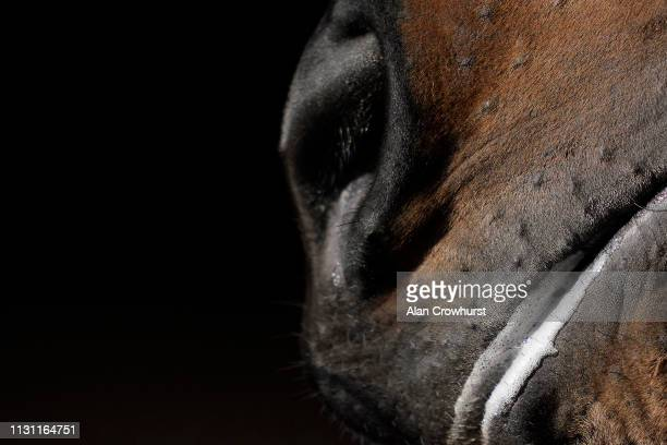 A general view as saliva sits in the horses mouth at Huntingdon Racecourse on February 21 2019 in Huntingdon England