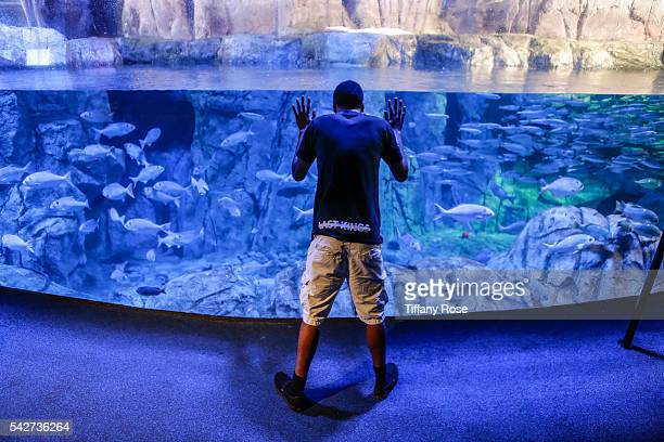 A general view at the HollyRod Foundation's My Brother Charlie goes to the Aquarium Presented by Toys'R'Us at the Aquarium of the Pacific on June 23...