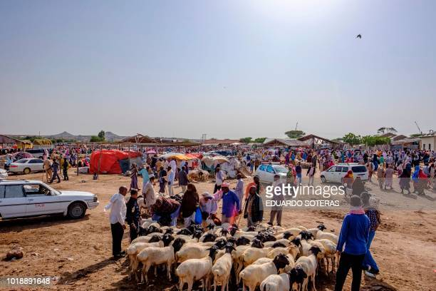 A general view at the livestock market in Hargeisa Somaliland on August 18 2018