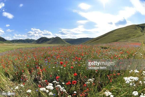 A general view during Annual Blossom in Castelluccio on July 10 2018 in Castelluccio di Norcia near Perugia Italy