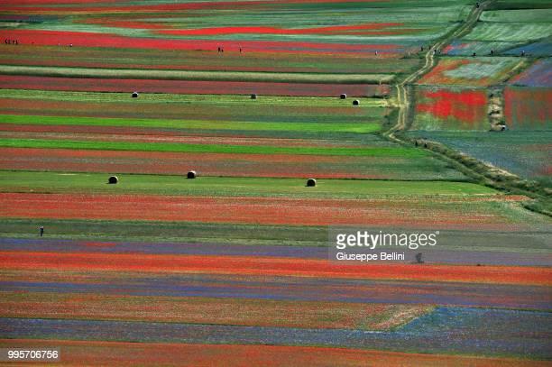 General view during Annual Blossom in Castelluccio on July 10, 2018 in Castelluccio di Norcia near Perugia, Italy.