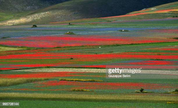 A general view during Annual Blossom in Castelluccio on July 10 2018 in Castelluccio di Norcia near Perugia Italy