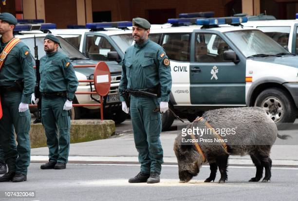 A general view during the Guardia Civil's Rural Action Unit's tribute to the Spanish Constitution on November 29 2018 in Logroño Spain