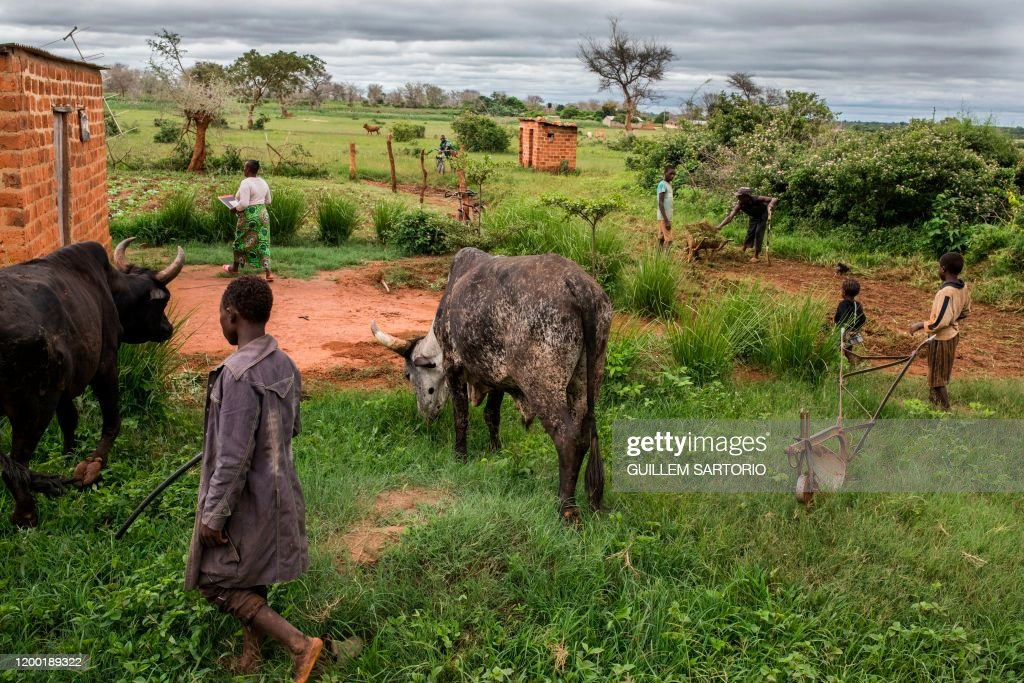 ZAMBIA-DROUGHT-CLIMATE-AGRICULTURE : News Photo