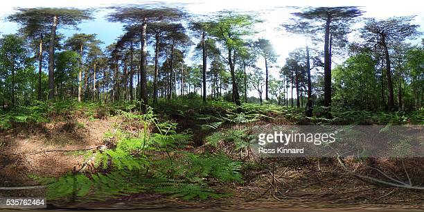 A general view from the trees adjacent to the 11th fairway during day two of the BMW PGA Championship at Wentworth on May 27 2016 in Virginia Water...