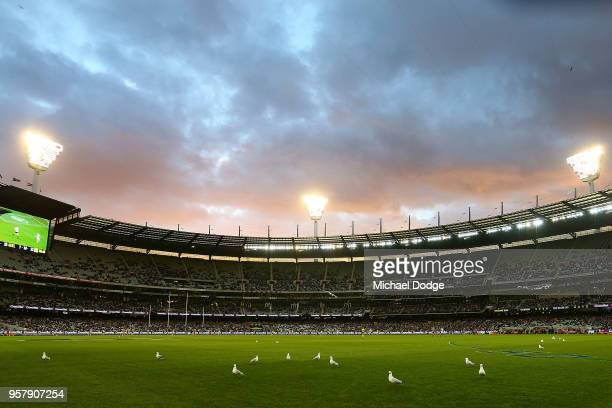 A general view is seen as seagulls gather during the round eight AFL match between the Collingwood Magpies and the Geelong Cats at Melbourne Cricket...