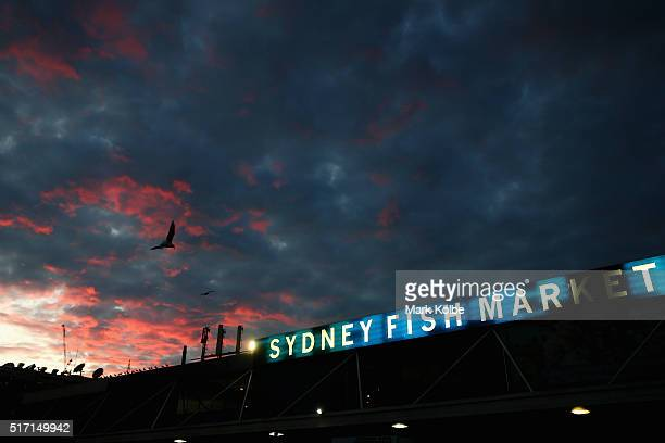 A general view is seen as the sun rises after the Easter auction at the Sydney Fish Market on March 24 2016 in Sydney Australia The auction comes...
