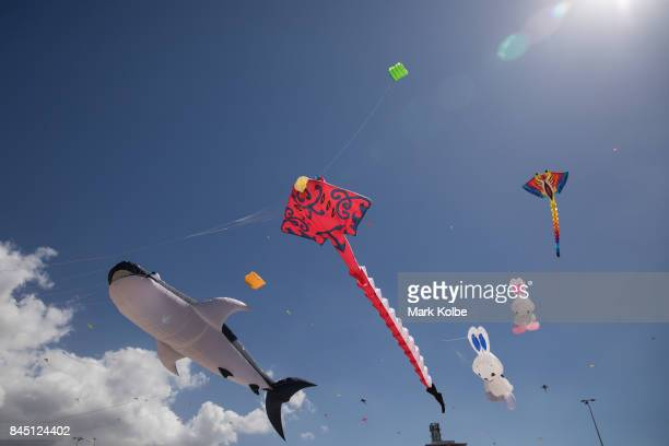 A general view is seen of kites flying during the Festival of the Winds in Bondi at Bondi Beach on September 10 2017 in Sydney Australia Festival of...