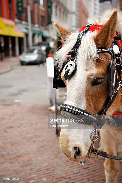 A general view of a Boston horse drawn carriage driver and horse in Boston's Faneuil Hall Market on March 3 2013 in Boston