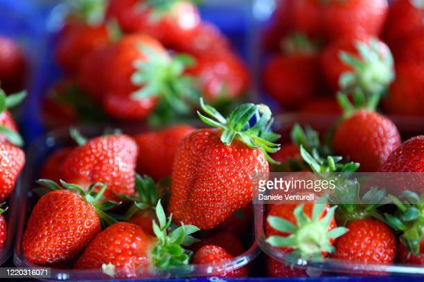 General view of a crate of organic strawberries on April 22 2020 in Castelfranco Emilia Italy Italy will remain on lockdown until May 4th to stem the...