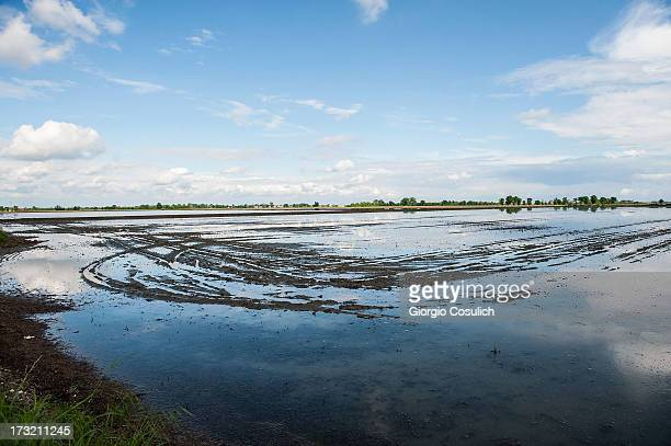 General view of a flooded rice field during sowing time on May 2 2013 in Novara Italy With a production of over 40 million tons Italy is the largest...