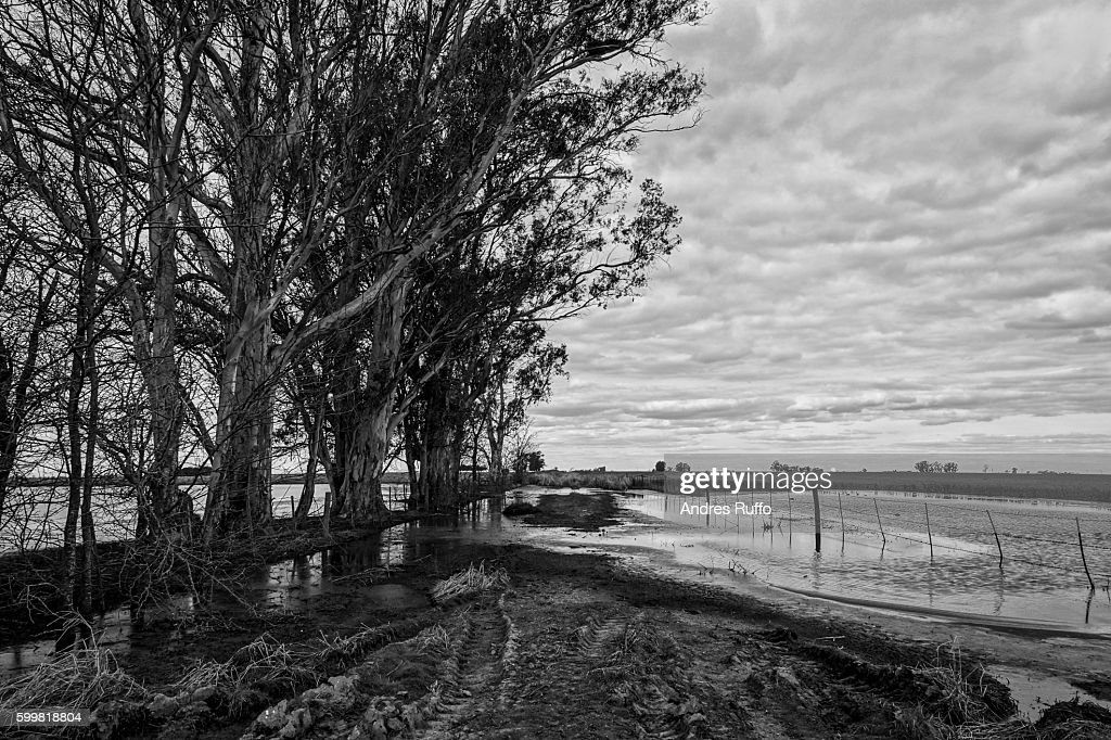 General view of a flooded road near a stand of trees : Stock Photo