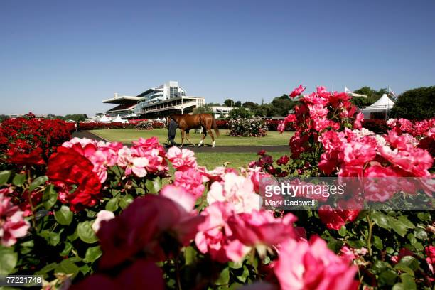 A general view of a horse and roses are seen in the mounting yard during the 2006 Emirates Stakes Day meeting at Flemington Racecourse on November 11...