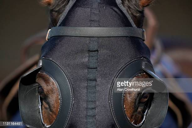 A general view of a horse with blinkers at Huntingdon Racecourse on February 21 2019 in Huntingdon England
