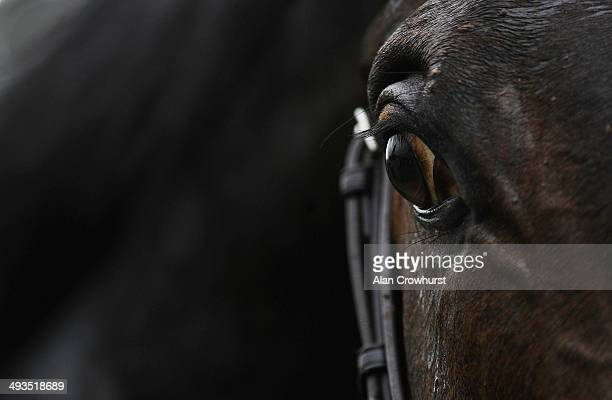 A general view of a horses eye at Curragh racecourse on May 24 2014 in Kildare Ireland