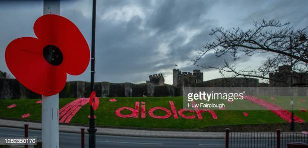 """General view of a poppy and a poppy display spelling out DIOLCH, which means """"Thank You"""" in Welsh on October 26, 2020 in Caerphilly, United Kingdom...."""