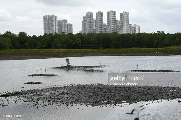 General view of a reservoir at a mangrove forest of Sungei Buloh Wetland Reserve in Singapore on February 2, 2021.