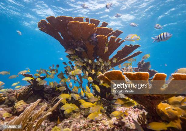 A general view of a school of fish and a sea can in a healthy coral reef off the coast of Isla Mujeres Mexico on September 26 2018 Many avid divers...