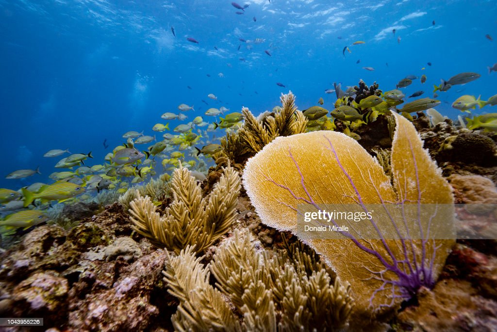 Yucatan Peninsula : News Photo
