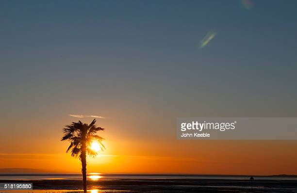 A general view of a silhouetted palm tree at sunset over the Thames Estuary on January January 19 2016 in Southend on Sea England