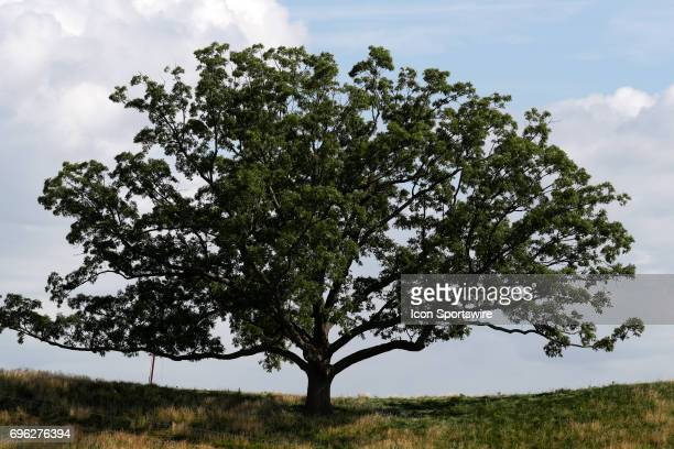 A general view of a tree on the 5 hole that can be seen during a practice round for the 117th US Open at Erin Hills in Erin Wisconsin