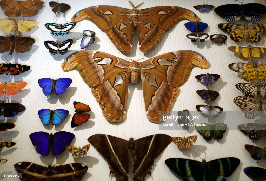 New Treasures Gallery at the Natural History Museum : News Photo