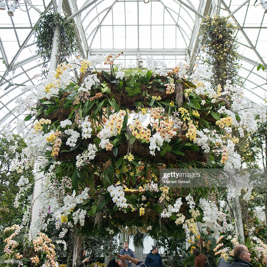 The orchid show chandeliers photos and images getty images a general view of atmosphere at the orchid show chandeliers at the new york botanical mozeypictures Gallery