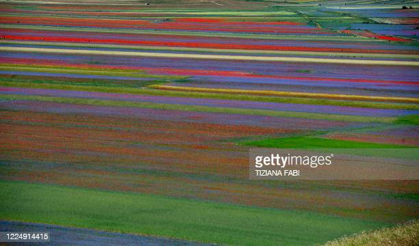 General view of blooming flowers and lentil fields in Castelluccio, a small village in central Italy's Umbria region on July 6, 2020.