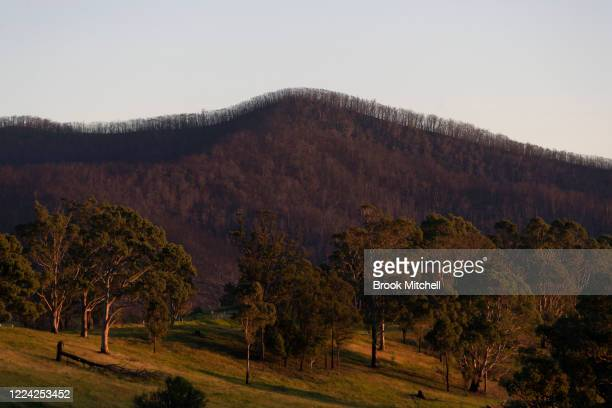 A general view of bushfire damaged country outside the small town of Cobargo on May 10 2020 in Cobargo Australia The small town of Cobargo on the New...