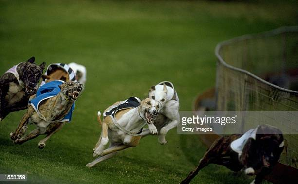 General view of dogs in action during a Greyhound Racing Meet held on the Gold Coast in Australia Mandatory Credit Allsport UK /Allsport