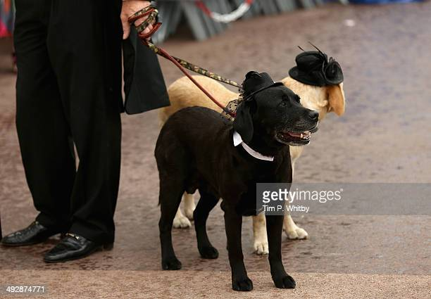A general view of dogs on set of Palm Dog during the 67th Annual Cannes Film Festival on May 22 2014 in Cannes France