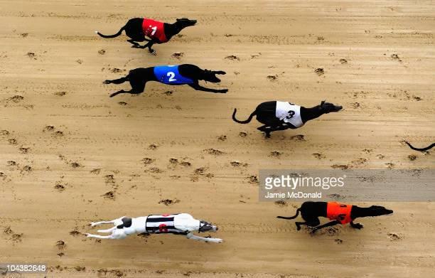 General view of dogs run at Romford Greyhound Stadium on September 23, 2010 in Romford, England.