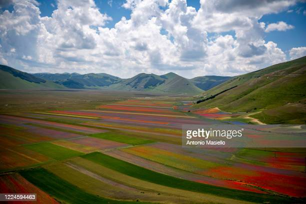 General view of fields of blooming lentil and poppies flowers during the annual blossom, on July 3, 2020 in Castelluccio di Norcia, Italy....