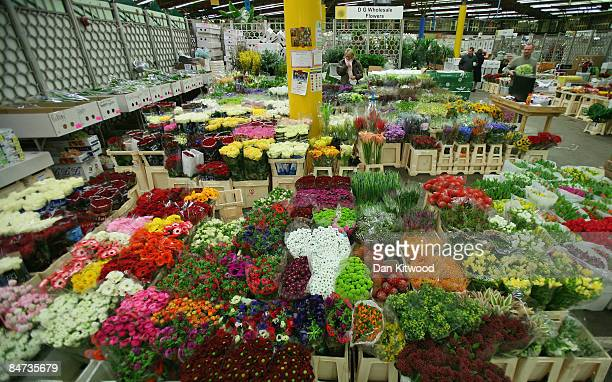 A general view of flower stalls in New Covent Garden Flower Market on February 11 2009 in London England New Covent Garden Flower Market is London's...