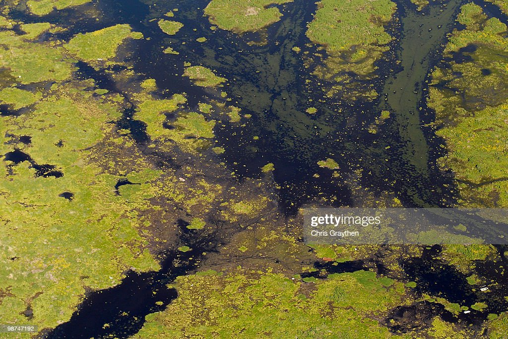 A general view of grassy marsh wetlands of St. Bernard Parish near the Gulf of Mexico on April 28, 2010 near New Orleans, Louisiana. An estimated leak of 1,000-5,000 barrels of oil a day are still leaking into the gulf from the Deepwater Horizon wellhead.