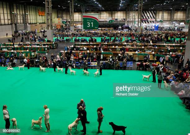 A general view of Hall 5 on day four of the Cruft's dog show at the NEC Arena on March 11 2018 in Birmingham England The annual fourday event sees...