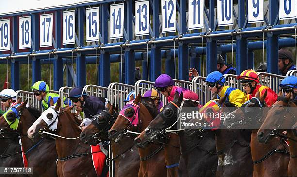General view of horses in the barriers at the start of Race 9 during Melbourne Racing at Caulfield Racecourse on March 26 2016 in Melbourne Australia