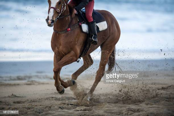 General view of horses kicking up the sand during a trackwork session at Lady Bay beach on September 20 2013 in Warrnambool Australia