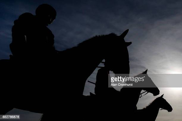 A general view of horses on the gallops prior to the upcoming Cheltenham festival starting on Tuesday on March 13 2017 in Cheltenham England