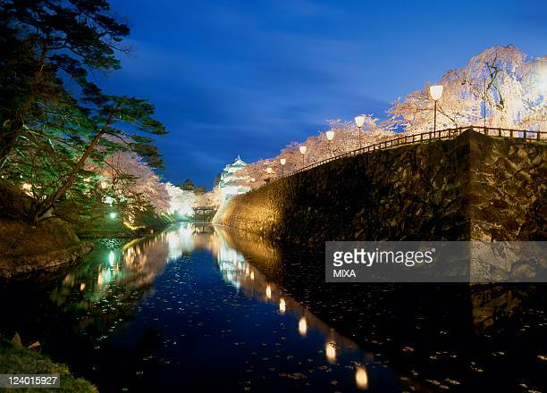 A general view of illuminated Hirosaki Castle and cherry blossoms on April 20 2007 Hirosaki Aomori Japan