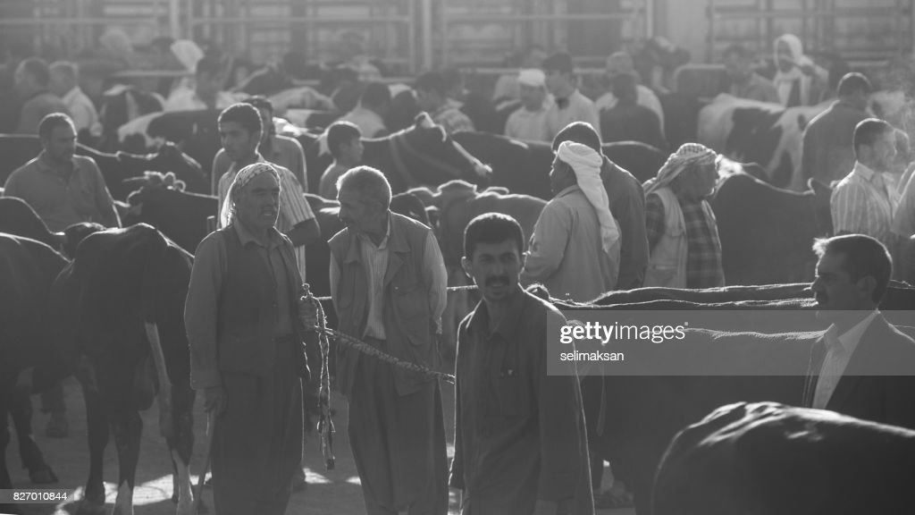 General View Of Livestock Market In The Eve Of Eid Al-Adha In Sanliurfa,Tuekey : Stock Photo